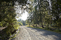 FOREST_LOCATION_90118