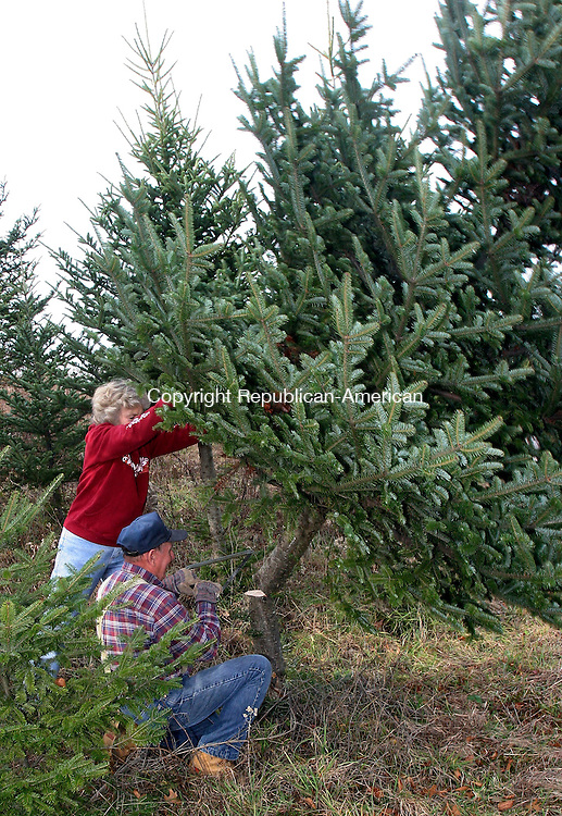 MIDDLEBURY, CT-27November 2006-112706TK08- (left to right) At the Busy Acres Tree Farm on the  Old Watertown Road in Middlebury, Lynne and Dave Brencher of Bethlehem harvest a 10 foot Fraiser Fir tree in preparation for the coming holiday season.  Tom Kabelka Republican-American (Dave Brencher, Lynne Brencher)