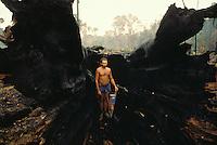 Amazon rainforest deforestation. Brazil nut tree burned. Brazil.