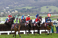 Thoroughbred racehorses horseracing at the National Hunt Festival at Cheltenham Racecourse, Gloucestershire