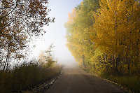 Dense morning fog envelopes changing autumn trees along a dirt road in Northwest Wyoming.
