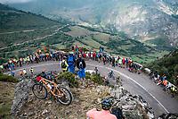 Esteban Chaves (COL/Mitchelton-Scott) up the Alto de La Cubilla<br /> <br /> Stage 16: Pravia to Alto de La Cubilla. Lena (144km)<br /> La Vuelta 2019<br /> <br /> ©kramon