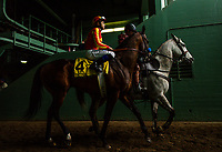 ARCADIA, CA - MARCH 10: Mckinzie #4, ridden Mike Smith walk too the track in the San Felipe Stakes at Santa Anita Park on March 10, 2018 in Arcadia, California.(Photo by Alex Evers/Eclipse Sportswire/Getty Images)