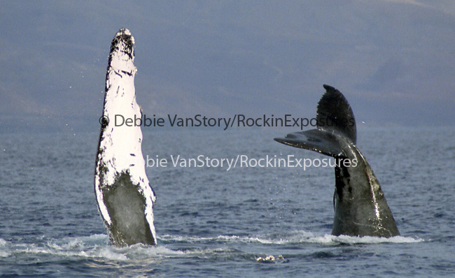 Debbie VanStory / Hawaiian Exposures / RockinExposures