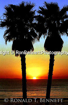 Sunset Laguna Beach California, Palms at Pacific Ocean sunset California,   Fine Art Photography, palm trees, sunset, ocean sunset, Pacific Ocean sunset,  Pacific Ocean, Fine Art Photography,