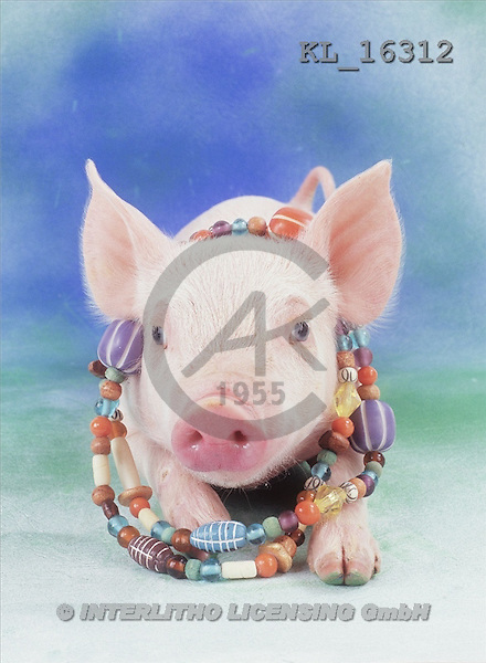 Interlitho, Alberto, ANIMALS, pigs, photos, little pig(KL16312,#A#) Schweine, cerdos