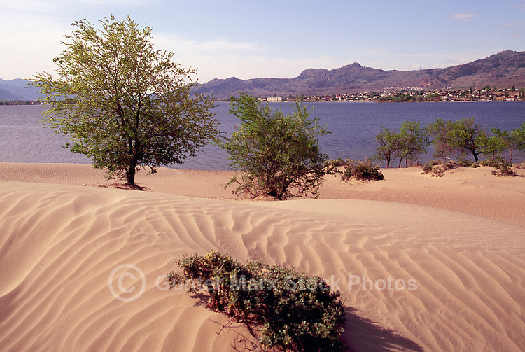 Pocket Desert Landscape and Osoyoos Lake near Osoyoos, BC, South Okanagan Valley, British Columbia, Canada - The Pocket Desert is part of the Great Basin Desert that extends southward to the Sonoran Desert inMexico