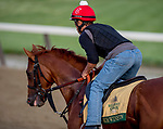 June 7, 2019 : Sir Winston gallops as horses prepare for the Belmont Stakes on Belmont Stakes Festival Weekend at Belmont Park in Elmont, New York. John Voorhees/Eclipse Sportswire/CSM