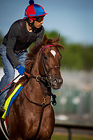 LOUISVILLE, KY - MAY 02: Irish War Cry gallops at Churchill Downs on May 02, 2017 in Louisville, Kentucky. (Photo by Alex Evers/Eclipse Sportswire/Getty Images)