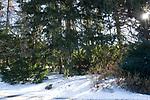 Winter at the Morton Arboretum