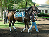 Starlite Starbrite before The Endine Stakes at Delaware Park on 10/13/12