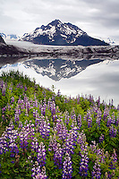 Sheridan Glacier, Cordova, Chugach National Forest, Alaska.
