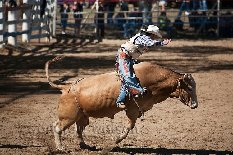Bull rider in action at Mareeba Rodeo.  Mareeba, Queensland, Australia