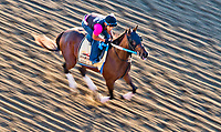 BALTIMORE, MD - MAY 17:  Lookin At Lee exercises in preparation for the Preakness Stakes this Saturday at Pimlico Race Course on May 17, 2017 in Baltimore, Maryland.(Photo by Scott Serio/Eclipse Sportswire/Getty Images)