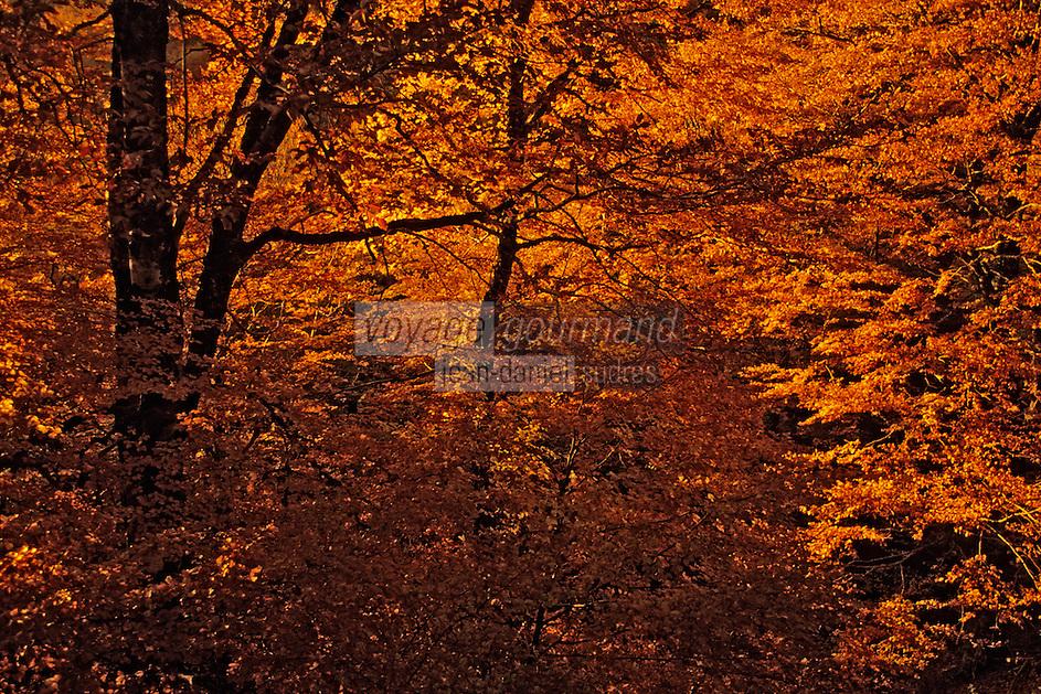 Europe/France/Auvergne/15/Cantal/Parc Naturel Régional des Volcans/Massif du Puy Griou (1694 mètres): Forêt dans la vallée de Mandailles