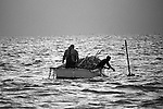 Long-hauling is a form of commercial fishing in Core Sound in which nets are towed between two fishing boats that sweep the fish for a mile or two crisscrossing and closing the loop.  Its season is from April until late October,