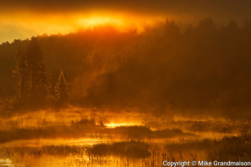 Morning fog at sunrise over wetland, Algonquin Provincial Park, Ontario, Canada