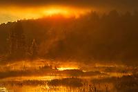 Morning fog at sunrise over wetland, Algonquin Provincial Park, Ontario, Canada