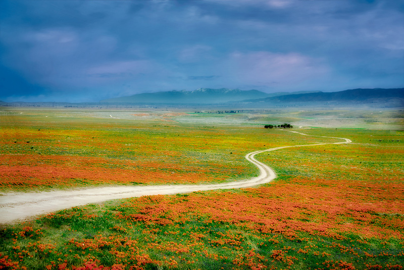 Road with California poppies. Antelope Valley Poppy Preserve. California