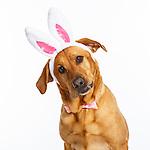 20170316 Ellen Easter