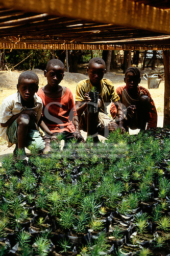 Chambeshi River, Zambia. African children learning about forestry with tree seedlings in a nursery.