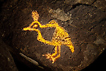 Quail Petroglyph #1, Three Rivers Petroglyph Site, New Mexico