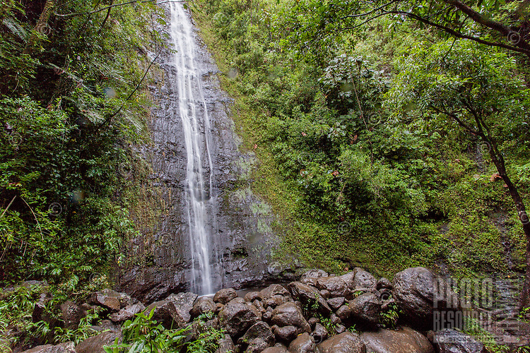 Lush Manoa Falls in Manoa Valley, Honolulu, O'ahu.