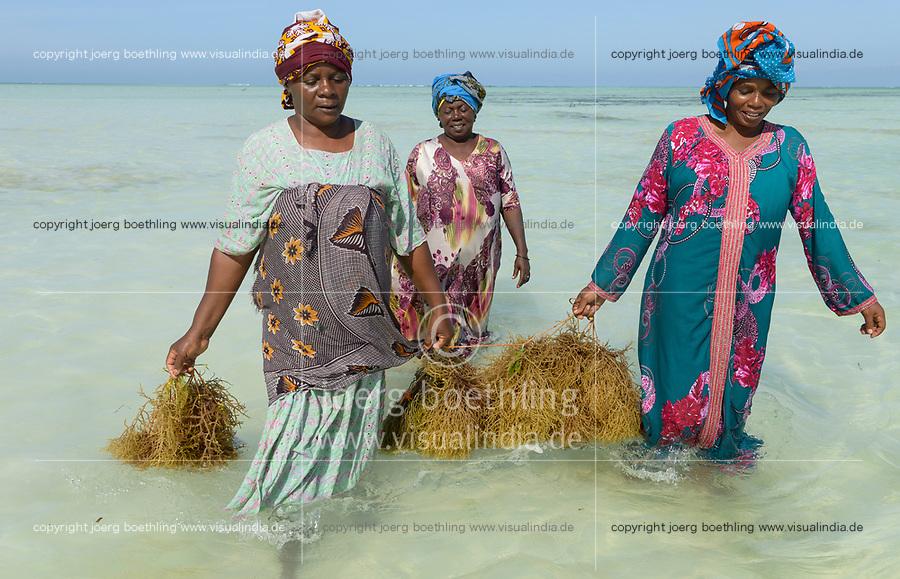 TANZANIA, Zanzibar, Paje, women plant seaweed near the beach, the red algae is used to extract carageenan as thickener for cosmetics and Food additive E 407 / TANSANIA, Sansibar, Paje, Frauen pflanzen Rotalgen am Strand, aus den essbaren Algen wird Carrageen als Emulgator und Verdickungsmittel E407 fuer Kosmetik und die Nahrungsmittelindustrie gewonnen, z.B. Eis, Cola, Syrup, Saft usw., Frau Mwanaisha Makame