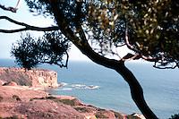Lloyd Wright: View of coast from Wayfarer's Chapel.  Photo '82.