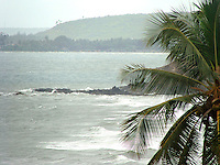 Goa beach with palm leaves in foreground in misty atmosphere.