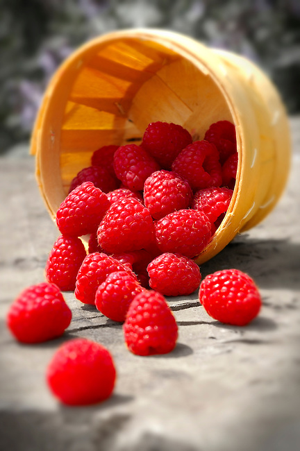 Punet of fresh picked raspberries