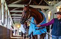 uLOUISVILLE, KENTUCKY - MAY 03: Irish War Cry, owned by Isabelle de Tomaso and trained by H. Graham Motion, is walked in his barn at Churchill Downs on May 3, 2017 in Louisville, Kentucky. (Photo by Jesse Caris/Eclipse Sportswire/Getty Images)