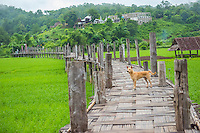 Thailand, Mae Hong Son. Buddhist monks cross Su Tong Pae Bamboo Bridge to collect food offerings in town, from Po Sama Temple. Scenics.