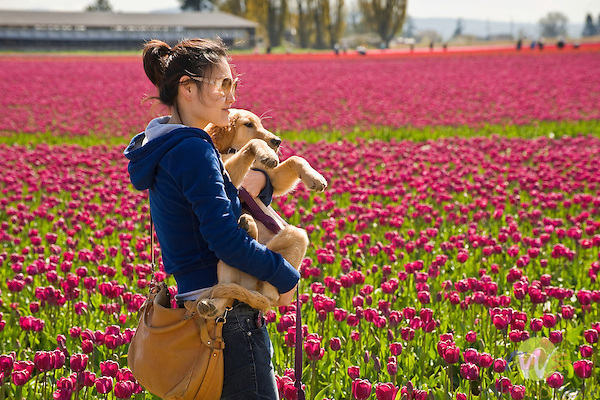 Roozengaarde Tulip Bulb farm, Mount Vernon, WA. Woman with dog