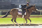 November 1, 2018: Bellafina, trained by Simon Callaghan, exercises in preparation for the Breeders' Cup Juvenile Fillies at Churchill Downs on November 1, 2018 in Louisville, Kentucky. Jamey Price/Eclipse Sportswire/CSM