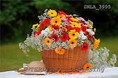 Carl, FLOWERS, photos, SWLA3995,#f# Blumen, Natur, flores, naturaleza