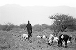 A Turkana village nr Lokitaung nr the Ilami triangle in the  Northern part of the Kenya bordering Sudan and Ethiopia.<br /> The Turkana are herders of sheep and goats and  are constantly migrating with their herds in search of  fresh pastures.