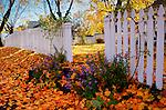 Idaho, Coeur d'Alene. Fence with autumn leaves.