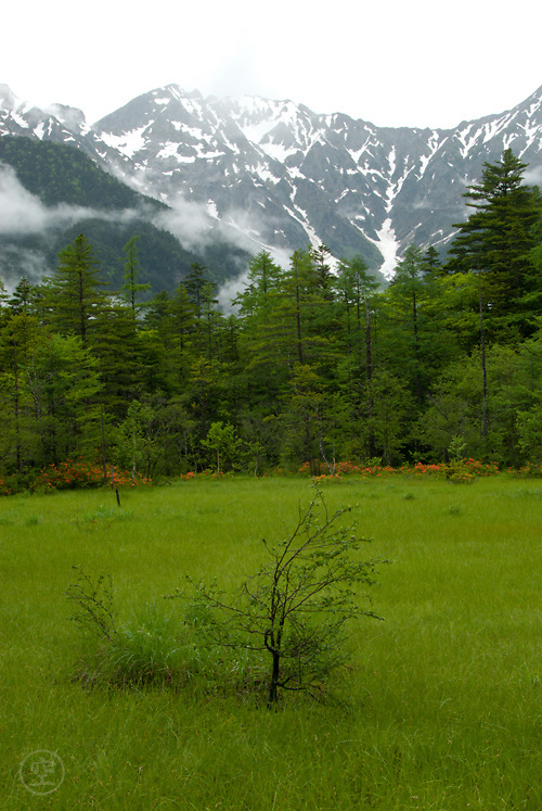 Early summer in the mountains brings rain and green growth to the high plain around Kamikochi.