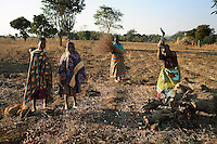 MPHANDULA, MALAWI - AUGUST 20: An unidentified woman cuts firewood from a tree as her daughters stand next to her on August 20, 2006 in Mphandula village, about 30 miles outside Lilongwe, Malawi. Most trees in the area have been cut down for firewood. Mphandula is a poor village in Malawi, without electricity or clean water. Nobody owns a car or a mobile phone. Most people live on farming. About 7000 people reside in the village and the chief estimates that there are about five-hundred orphans. Many have been affected by HIV/Aids and many of the children are orphaned. A foundation started by Madonna has decided to build an orphan center in the village through Consol Homes, a Malawi based organization. Raising Malawi is investing about 3 million dollars in the project and Madonna is scheduled to visit the village in October 2006. Malawi is a small landlocked country in Southern Africa without any natural resources. Many people are affected by the Aids epidemic. Malawi is one of the poorest countries in the world and has about 1 million orphaned children. (Photo by Per-Anders Pettersson)