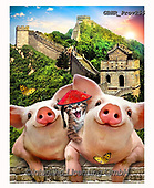 Howard, REALISTIC ANIMALS, REALISTISCHE TIERE, ANIMALES REALISTICOS, selfies,pigs,great wall, paintings+++++,GBHRPROV255,#a#, EVERYDAY