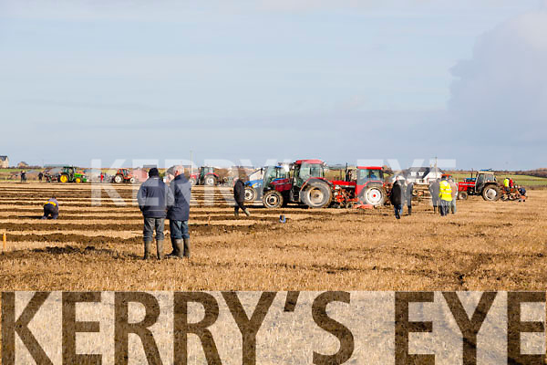 At the Ardfert Ploughing Match in  Dominic Flaherty's land, Banna on Sunday