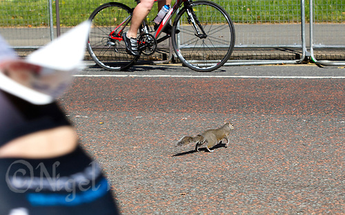 07 AUG 2011 - LONDON, GBR - A squirrel makes a dash for the opposite side of the road during the age group Olympic distance race at triathlon's ITU World Championship Series event .(PHOTO (C) NIGEL FARROW)