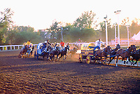 Cowboys racing Chuckwagons in Chuckwagon Racing Event at Calgary Stampede, Calgary, Alberta, Canada - Editorial Use Only