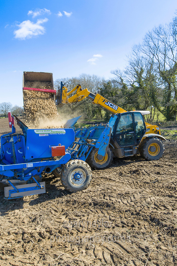 Loading planter with Scotch Maris Peer seed - Norfolk, March