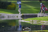 A duck swims on the pond near the green on 6 as players cross the bridge during round 2 of the World Golf Championships, Mexico, Club De Golf Chapultepec, Mexico City, Mexico. 2/22/2019.<br /> Picture: Golffile | Ken Murray<br /> <br /> <br /> All photo usage must carry mandatory copyright credit (&copy; Golffile | Ken Murray)