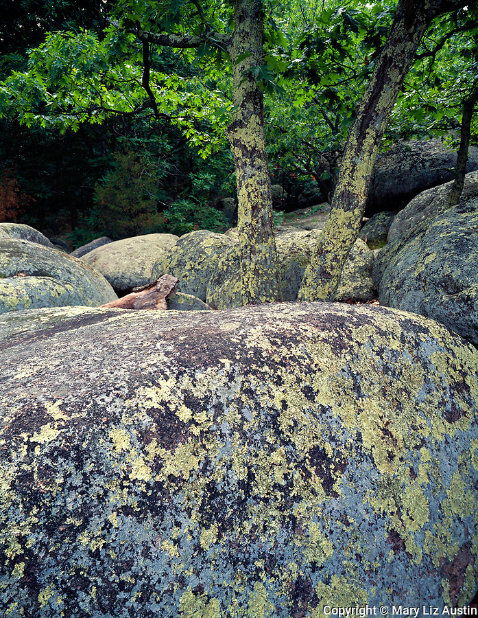 Elephant Rocks State Park, MO<br /> Lichen and moss cover giant granite boulders (a billion years old) and oak trunks in forest understory