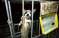 A dog in a cage at a pet shop in Fuzhou, China. Previously banned as pets, dogs are today increasingly popular, although ownership restrictions still apply in big cities.