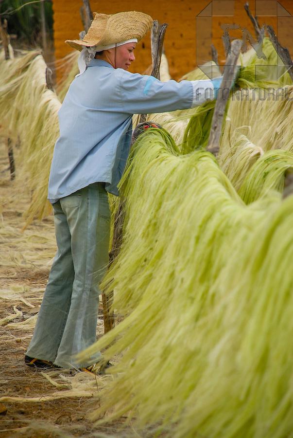secagem da fibra do sisal agave sisalana sisal agave sisalana fiber