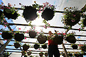 2014_05_18_hanging_baskets